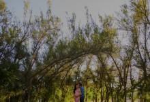 [ ELIZABETH + MARIO + ALAN = BEBÉ ] - FOTÓGRAFO DE EMBARAZOS, MÉRIDA, YUCATÁN.